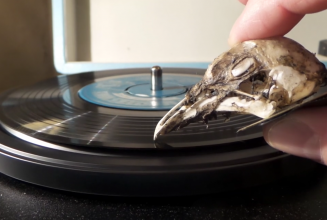 Apparently you can use a seagull skull as a turntable needle