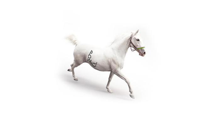 powell-horse